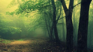 hoia-baciu-woods-wallpapers-haunted-romanian-forest-433487